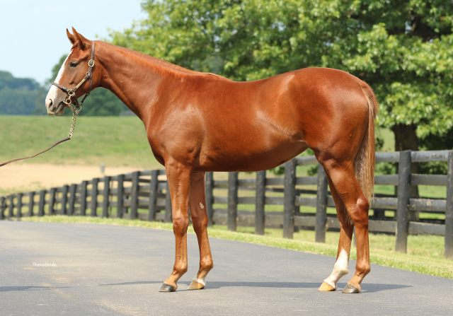 South Point Sold Yearling Drynachan