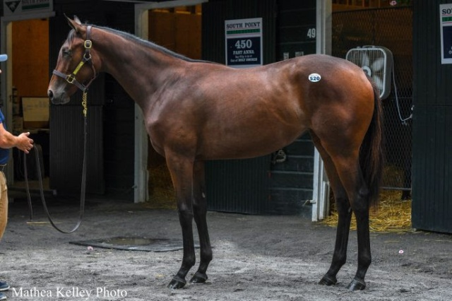 $170,000 Normandy Invasion Yearling