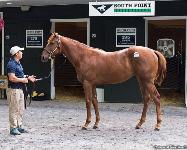 Hip #131 at Fasig-Tipton Saratoga Sale