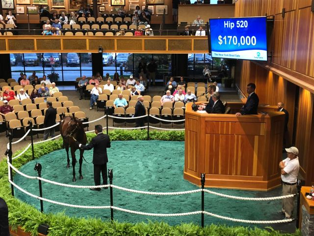 South Point Sales sells $170,000 Normandy Invasion yearling