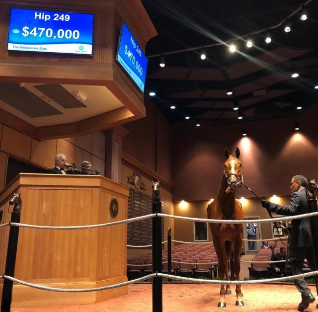 South Point Sales Hip #249 at Fasig-Tipton November